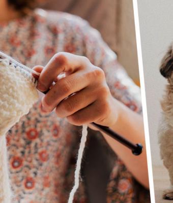 Хозяйка показала, что можно сделать из шерсти линяющей собаки. Спойлер: теперь у неё есть два пса