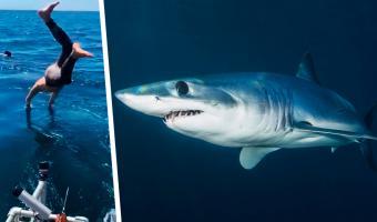 Герой нырнул к акуле, чтобы доказать: не все они опасны. Всё бы ничего, но смельчак перепутал вид хищной рыбы