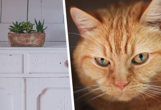 Коты объявили войну хозяйке, и она проиграла первую битву. Отряд хвостатых успешно вывел кухню из состава дома