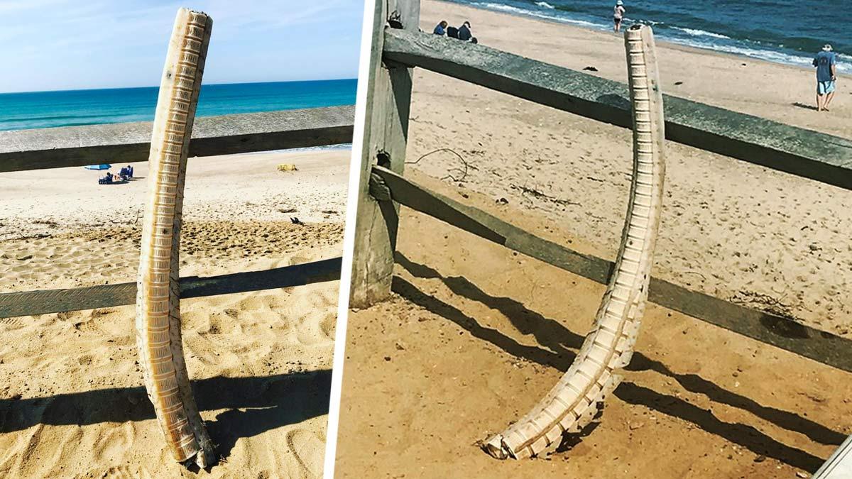 Береговая охрана нашла 1,5-метровый скелет рыбы, выброшенный на пляж. Учёные поняли, чей он, но не кто её убил