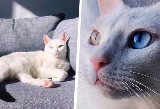 У кошки с шестью пальцами появились фото в инстаграме — и мир влюбился. Самые мягкие лапки выглядят именно так