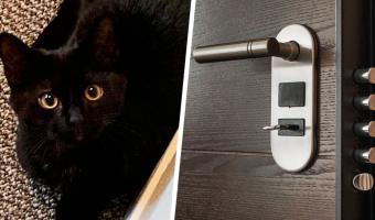 Кот лишился самого дорогого и ответил хозяевам тем же. Бубенцы пошли по цене дома, ведь он запер дверь изнутри