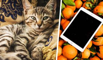 Хозяйка заглянула в планшет и узнала, что её кот делает один дома. Именно так выглядит топ-модель по-кошачьи
