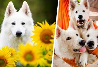 Хозяйка хотела устроить псам фотосет. Но в итоге узнала, почему никогда нельзя снимать животных с цветами