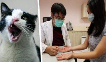 Женщина думала, что у неё рак, но ошиблась. От её опасной болезни не застрахован ни один хозяин домашних котов