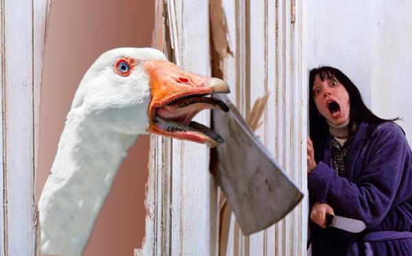 Девушка показала клюв гуся изнутри, и у людей появилась новая фобия. Так вот почему все так боятся этих птиц