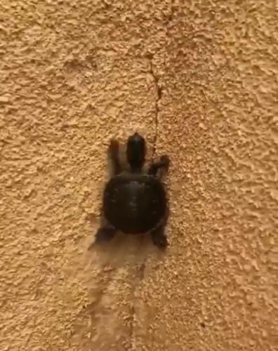 Черепашки-ниндзя существуют, и вот видеодоказательство. Когда нужно сбежать от двуногих, они ломают гравитацию