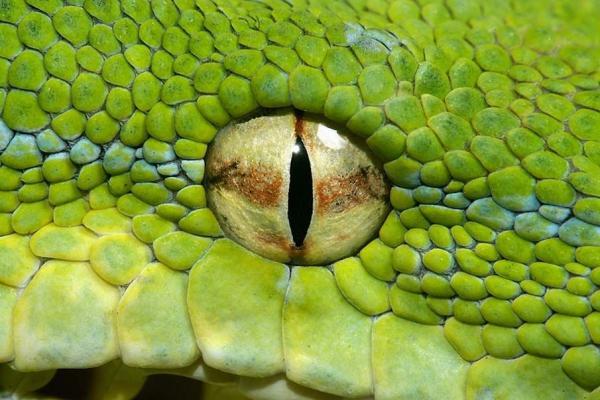 Парень родился рептилией и рассказал, как видит мир. Спойлер: осторожно, ему страшно смотреть в глаза