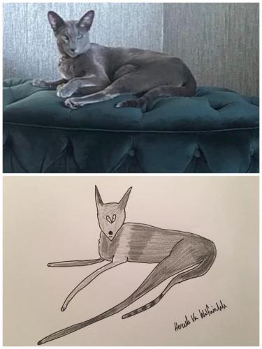 Парень в шутку рисовал смешные портреты животных, но пранк зашёл далеко. Люди стали платить, как за шедевры