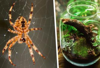 Мама спрятала в банку яйца чёрной вдовы, а те устроили побег (да, как из Шоушенка). Так выглядит море пауков