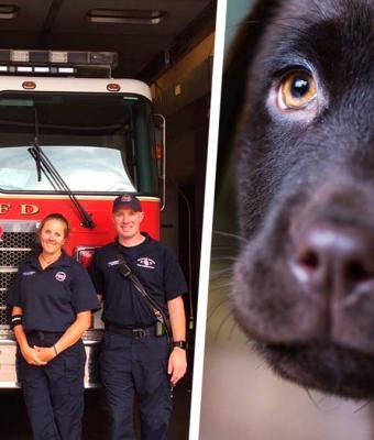 Пожарные были рады, что спасли щенков лабрадора. Стало не до смеха, когда они поняли, кто это на самом деле