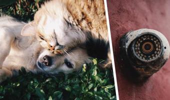 Хозяйка установила дома и камеру и теперь точно знает, кто лучше: кот или пёс. Один из них — настоящий монстр