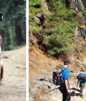 Бездомный пёс вывел путешественников к лагерю из темноты. Но домой его не забрали — и на то есть свои причины