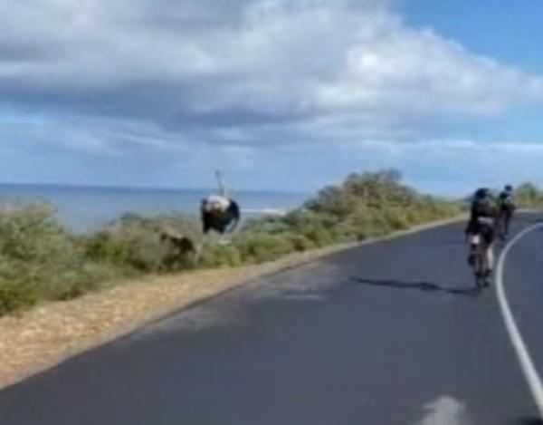 """Люди устроили велогонку, но их обогнал """"призрачный гонщик"""". Ему не нужен был велик, чтобы показать, кто лидер"""