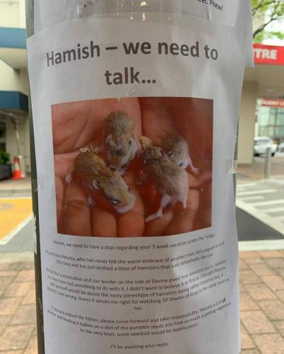 Парень увидел объявление о хомяке и не сразу понял, что его ждёт. Эта драма в трёх листовках достойна Netflix