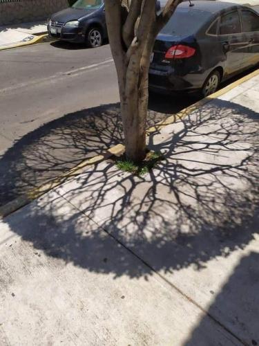 Ровно в полдень тень дерева превращается в чертёж из AutoCAD. Но эта красота - признак страдания