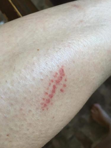 Гусеница отрастила себе шикарную шевелюру, чтобы убивать. Вижу шёрстку - иду гладить, но не в этом случае