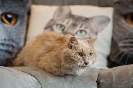Кот вернулся к хозяевам спустя три года после побега. Но пара считает - это не чудо, а привет с того света