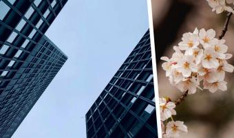 Парень показал фото небоскрёбов, и разницу в менталитетах Японии и США видно сразу. Но поймут её самые зоркие