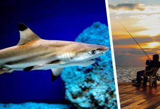 Акулой уже никого не удивить, а как насчёт двухголовой? Рыбак достал такого монстра, но главное — размер улова