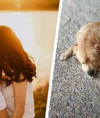 Хозяйка оставила пса с парнем и пожалела. Питомца она больше не узнаёт — его образ не лезет ни в какие рамки