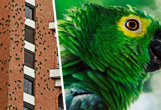 В Бразилии попугаи годами грызут здание. Это не месть, а загадка, ответ на которую не могут найти даже учёные