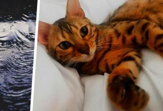 Хозяева радовались новому трюку кошки, но пока не оставили её одну. За полчаса та почти уничтожила их дом