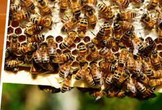 Люди увидели ролик с парнем, нарезающим пчелиные соты, и лишились сна. Зря он решил закосплеить Беара Гриллса