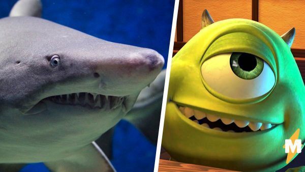 Рыбак показал акулу - символ 2020 года. У неё тоже странное всё: от цвета кожи до глаза Майка Вазовски