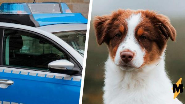 Старушка потеряла собаку и вызвала полицию. Но офицеру потребовалась секунда, чтобы раскрыть это дело