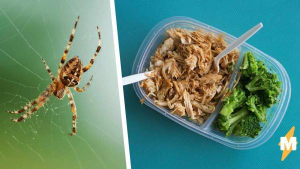 Девушка обедала, но трапезу прервал паук-гигант. Однако крик был преждевременным, а монстр безобидным (совсем)