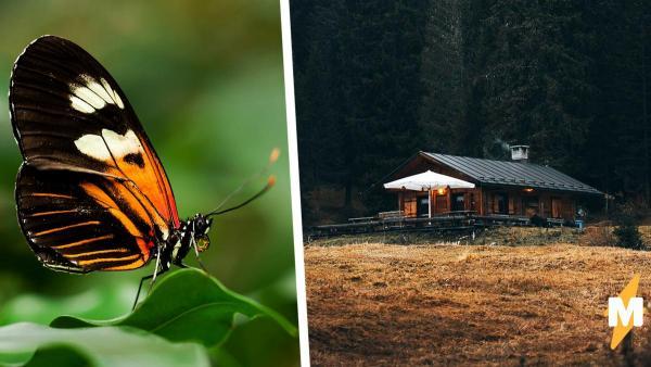 Австралийка собрала коллекцию насекомых, пробравшихся в её дом. И чем больше люди смотрят, тем им страшнее