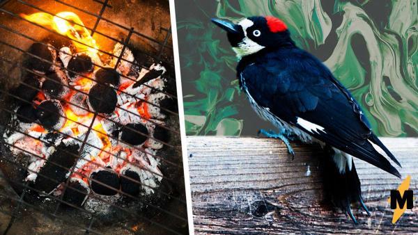 Парень не подозревал, как именно птицы используют его гриль во дворе, но однажды решил его открыть