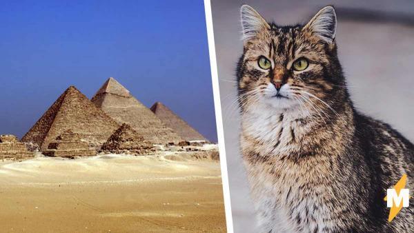 Учёный вскрыл египетскую гробницу и стал жертвой проклятья. Его не пожелаешь и врагу - парня презирают котики