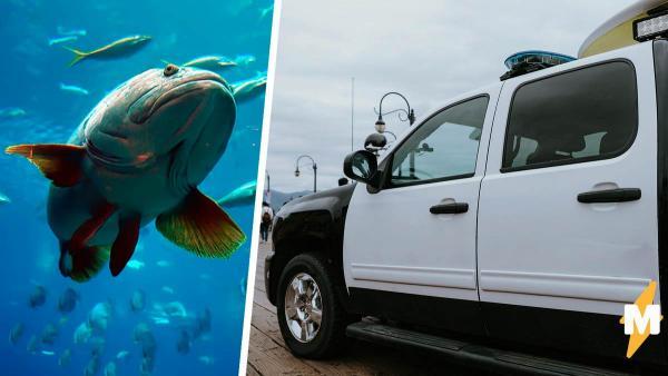 Людей напугала огромная рыба, и они вызвали полицию. Копы проверили монстра и больше не выходят на связь