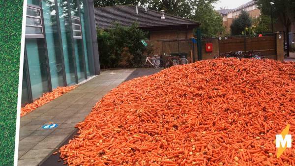 Во двор университета как с неба упали 32 тонны моркови. Нет, это не Хогвартс, и не его студенты, это искусство