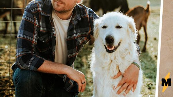 Мужчина показал, почему лучше никогда не гладить бездомных животных. Если вы недавно ели - лучше не смотрите