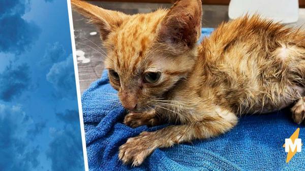 Девушка показала фото кота через месяц после спасения. Теперь его вид заставляет людей не плакать, а улыбаться