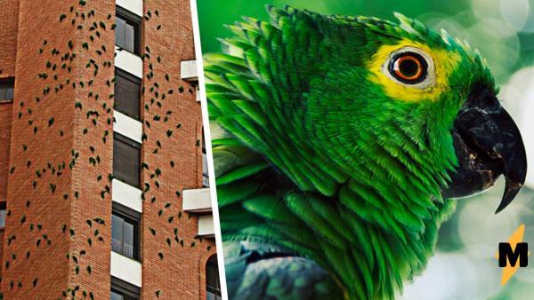 В Бразилии попугаи годами грызут здание. Это не месть, а загадка, ответ на которую не могу найти даже учёные