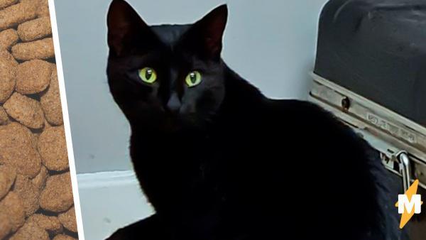 Охранник подкармливал бездомную кошку, но раскрыл её тайное прошлое. Да, даже котейкам есть, что скрывать