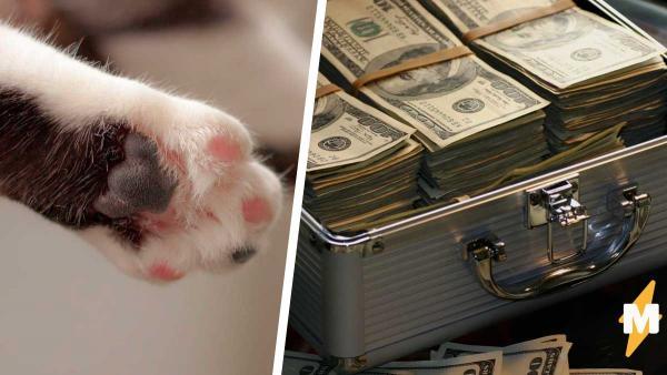 Мужчина шёл в банкомат, а стал очевидцем преступления. Деньги бандитам оказались не нужны, ведь у них лапки