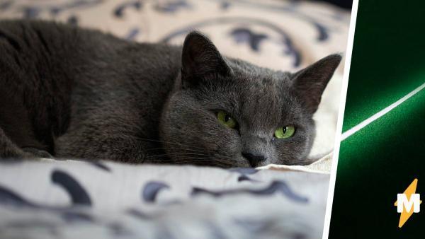 Котик доказал, что у него есть голова на плечах. Теперь старый миф о лазерах развеян в пух и прах