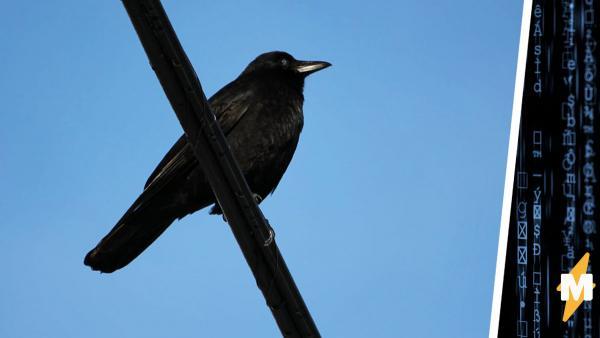 Девушка показала ворону, висящую вверх лапами, и сломала матрицу. Вызывать Нео не стоит, а Бэтмена – можно