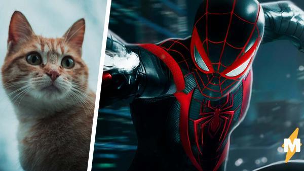 В Spider-Man: Miles Morales доступен боевой кот. И геймеры плачут, ведь такого милого котейку хочется гладить