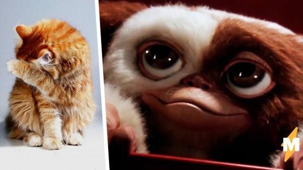 Кот с синяками под глазами похож на Гизмо. Но люди видят вместо гремлина дух (вызывайте Малдера и Скалли)