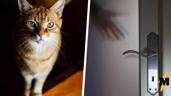 Вор попытался вскрыть дом, но его ждала неудача. Если бы он знал, что попадётся в лапы кота-охранника