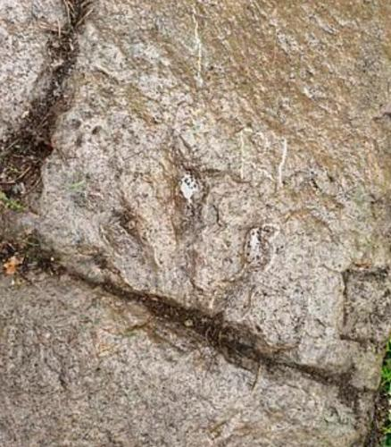 Пятилетка увлекся наукой и сделал открытие, которое ученые не смогли сделать за 130 млн лет