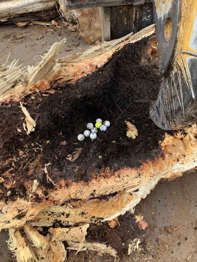 Лесоруб спилил дерево и узнал его секрет. Оказалось, на одного грустного гольфиста 15 лет назад стало больше