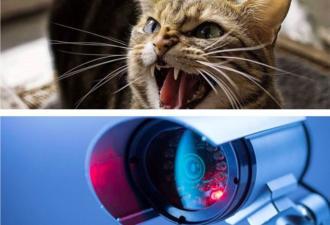 Хозяин тайно наблюдал за кошкой, но она его раскрыла. Её реакция сказала о многом: парню пора искать новый дом