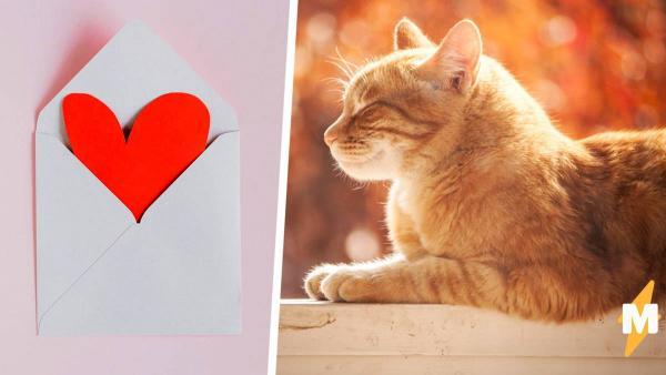 Парень сделал квест для девушки и растопил сердечки людей - дело не в награде, а в ностальгии и участии кота